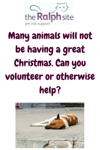 Volunteering for pets at Christmas