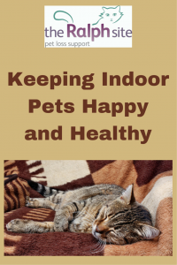 Tips on keeping indoor pets happy and healthy.