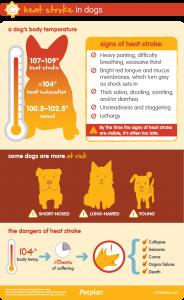 Heat stroke can be rapidly fatal - PLEASE do not risk it!