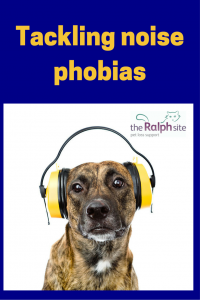 Tackling noise phobias in pets