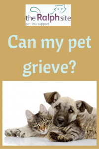 Can my pet grieve