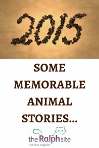 2015 memorable animal stories