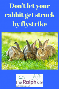 Dont let your rabbit get struck by flystrike pinterest