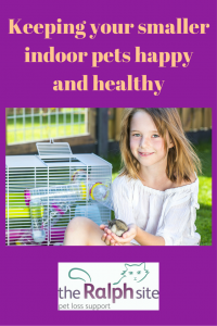 Keeping your smaller indoor pets happy and healthy pinterest