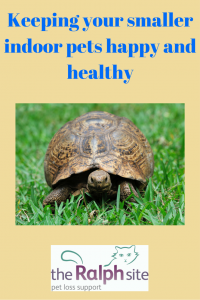 kEEPING YOUR SMALLER INDOOR PETS HAPPY AND HEALTHY part 2 pinterest
