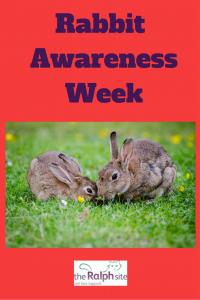 Rabbit awareness week pinterest