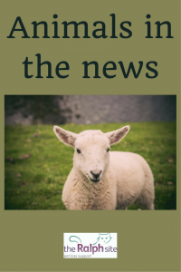 Animals in the news pinterest