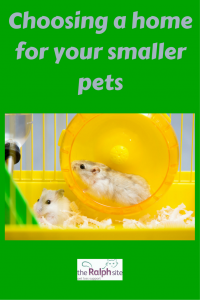 Choosing a home for your smaller pets pinterest