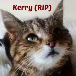 irenes-kerry-rip-dec-2015-with-name