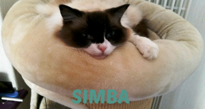 simba-with-name