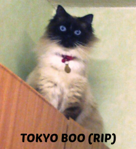 tokyoboo-rip-with-name