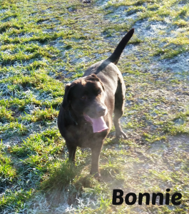 Bonnie in field with name